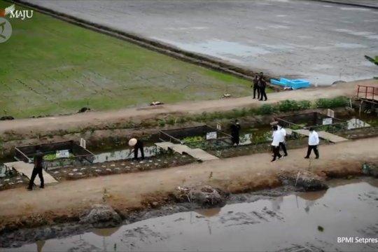 Presiden Jokowi dorong pembangunan pertanian modern