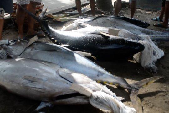 Produksi perikanan tangkap di Padang stabil di masa pandemi