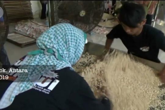 Dekan Faperta UGM usul kembangkan koro sebagai pengganti kedelai impor