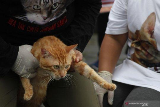 Tiga Pilar Pegadungan beri edukasi kucing bukan hewan untuk dikonsumsi