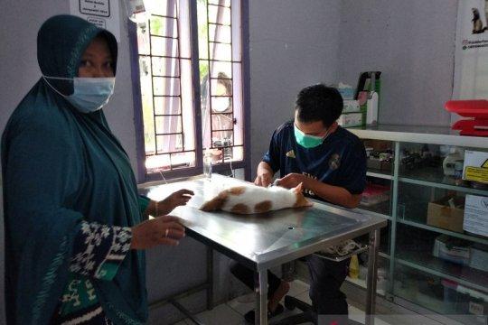 Klinik Hewan Darurat Gempa Sulbar salurkan satu ton makanan kucing