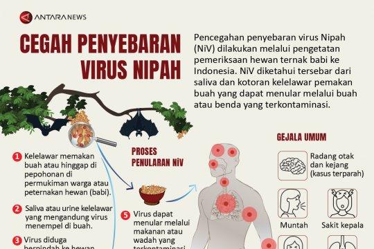 Cegah penyebaran virus Nipah