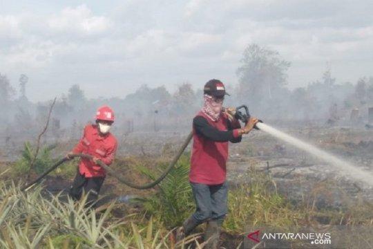 Kebakaran hutan terjadi di dekat konsesi Sinarmas Siak