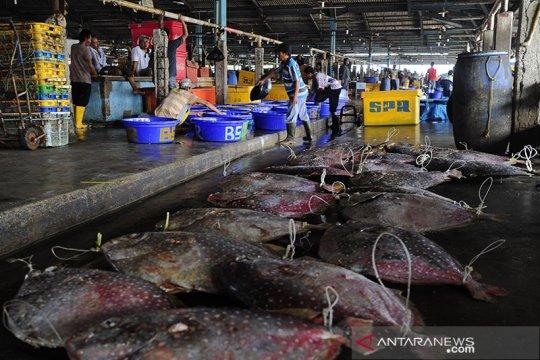 Perum Perindo terus penuhi permintaan bahan baku ikan ke Jepang