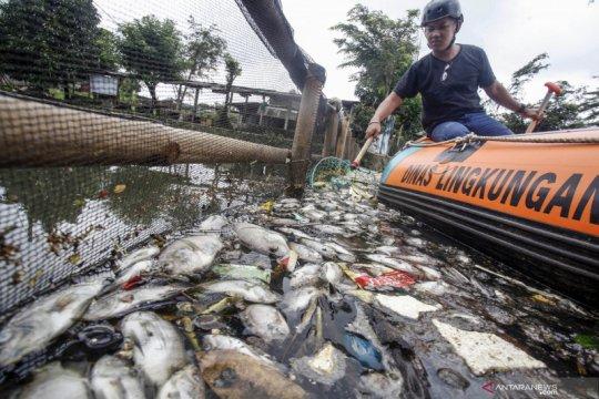 Ribuan ikan di Setu Citongtut Bogor mati mendadak