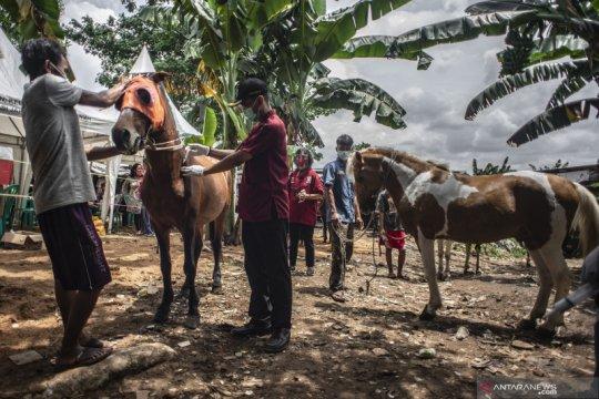 39 kuda delman di Jaksel dapat bantuan vaksinasi gratis