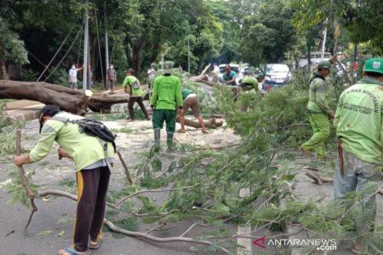 Mobil tertimpa pohon tumbang bisa diajukan klaim asuransi