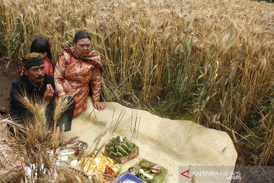 FAO: Harga pangan dunia naik pada Januari, tertinggi sejak Juli 2014