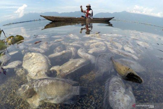Ikan Keramba Jaring Ajung di Danau Maninjau ditemukan mati