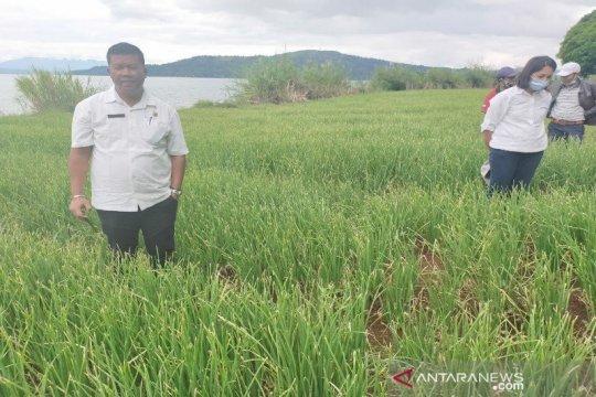 Tapanuli Utara targetkan tambahan 100 ha lahan bawang merah pada 2021