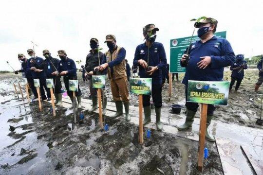 Rehabilitasi hutan mangrove di Sumsel butuh peran swasta