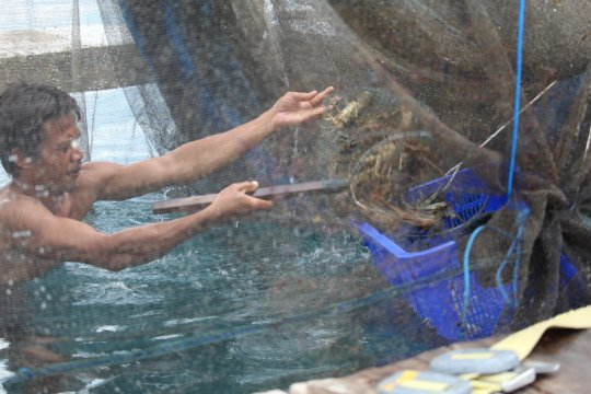 Pakar usul ada kawasan khusus untuk kelestarian lobster