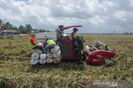 Wakil Bupati: Pasaman Barat jadi kawasan lumbung pangan