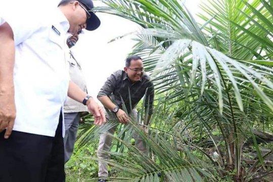 Musi Banyuasin kawal produksi energi biofuel bensin sawit