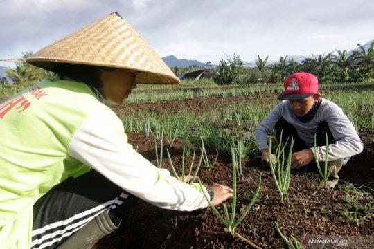 LSM: Anak muda solusi sistem pangan Indonesia berdaulat