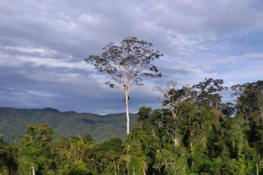 22 desa di Kabupaten Merangin terima dana afirmasi perhutanan sosial