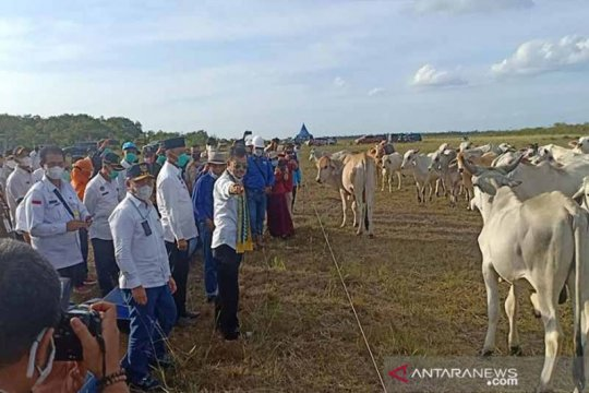 Mentan:Peternakan sapi di Sukamara sangat berpotensi dikembangkan