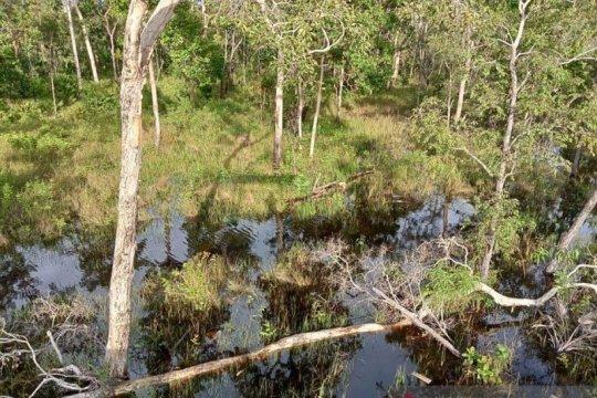 KLHK tanggapi laporan 11 LSM soal deforestasi tanah Papua