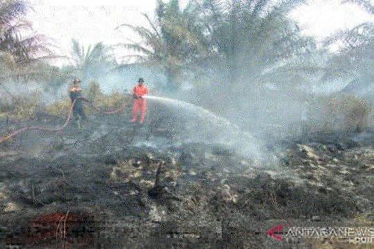 Dua hektare lahan kelapa sawit kembali terbakar di Agam