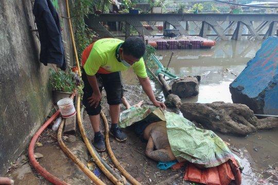 Jenazah bertato ditemukan di Kali Ciliwung