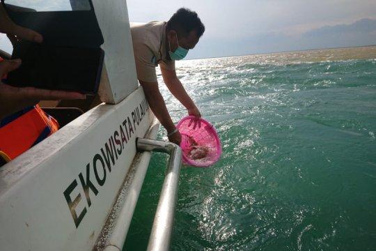 KKP: Penangkapan benur hanya dilakukan nelayan kecil terdaftar
