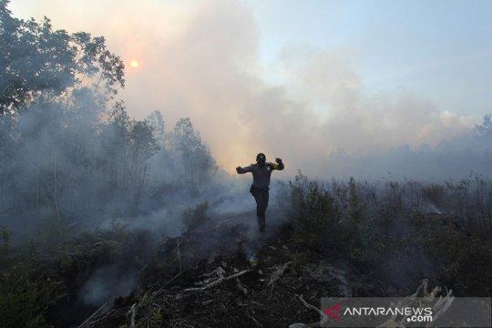 Lahan terbakar di Riau Januari-13 Fabruari capai 55,71 hektare