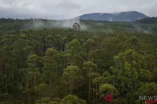 Kawasan konservasi esensial Sumsel disebut terluas di Indonesia