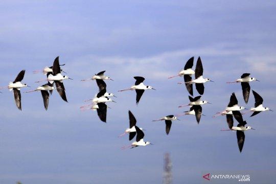 Habitat burung Gagang Bayam Timur