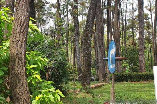 Walhi Sumsel data hutan desa rawan penebangan liar