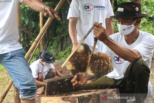 Bangun UMKM, Askrindo dukung usaha peternakan lebah hutan di Batang