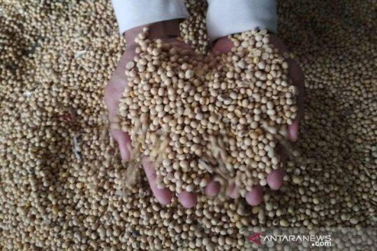 Naik lagi, harga kedelai impor di Kudus Rp9.800 per kilogram