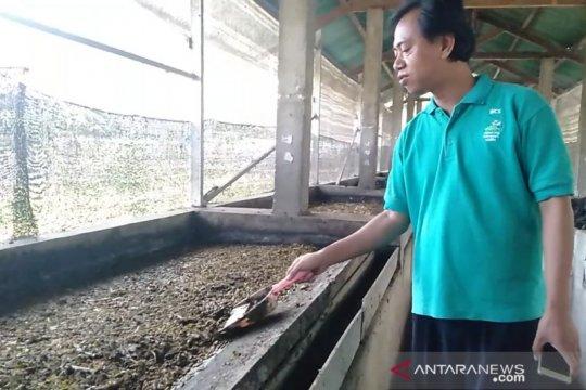 Budidaya maggot di NTB terkendala pasokan sampah