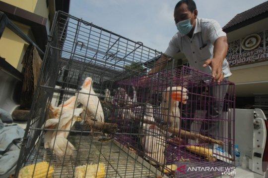 Polda Jatim ungkap penjualan puluhan satwa dilindungi