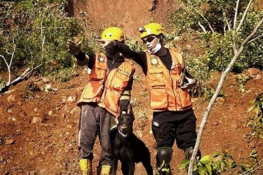Kejelian anjing pelacak endus korban tanah longsor di Nganjuk