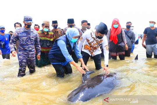 FKH Unair dilibatkan teliti sampel paus terdampar di Madura