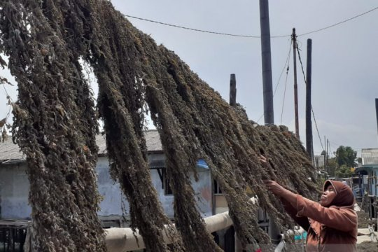 Jejak Pulau Amat Belanda, dari lokalisasi menjadi pengekspor rengkam