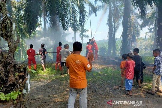 Lahan kelapa sawit di Agam Sumbar terbakar