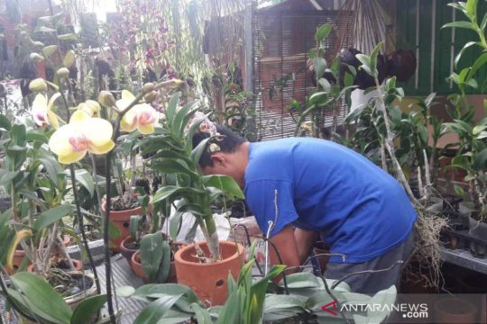 Mustika Desa upaya Temanggung percepat pemulihan ekonomi