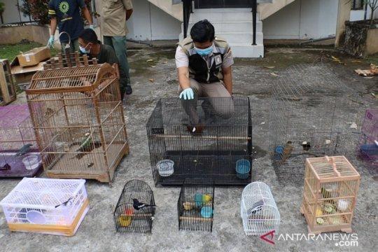 Tim gabungan gagalkan pengiriman 110 ekor burung dilindungi ke Jawa