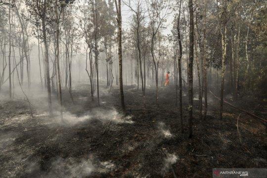 Kebakaran hutan di kawasan Bandara Hang Nadim Batam