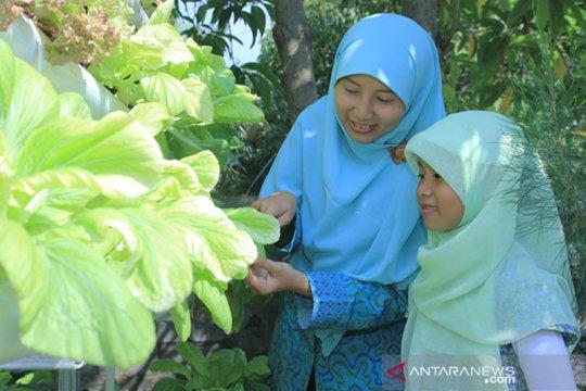 Peneliti: Perlu berkebun tanaman berkhasiat untuk imunitas tubuh