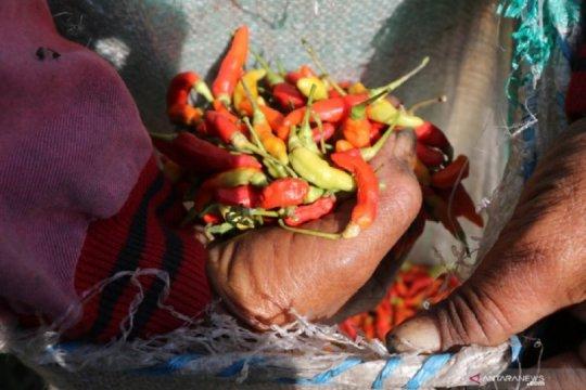 Harga cabai di Kediri Rp100.000/kg imbas cuaca ekstrem