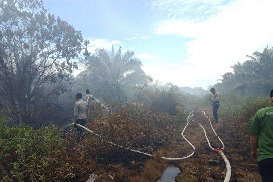 BPBD sebut kebakaran hutan empat daerah di Sumbar efek cuaca panas