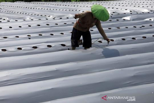 Percepatan realisasi KUR sektor pertanian