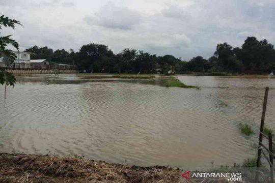 19.433 hektare sawah di Kabupaten Bekasi terendam banjir