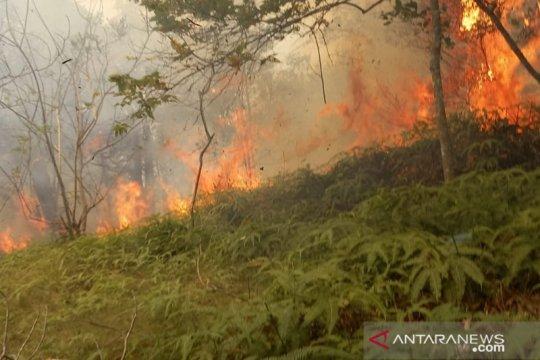 Puluhan hektare kawasan hutan di Batam terbakar
