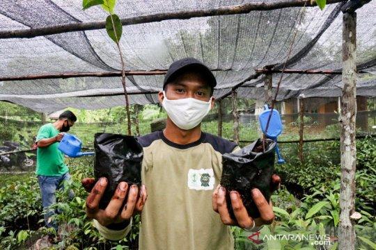 Sejuta pohon dicanangkan Borneo Nature Foundation di Hutan Sebangau