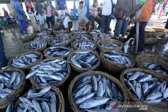 Untuk ekspor, KKP: Semua tangkapan ikan nelayan harus dapat ditelusuri