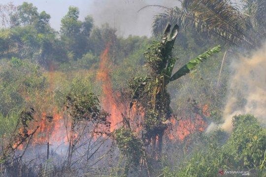 91 titik api ditemukan di enam kabupaten/ kota di Riau pada Sabtu