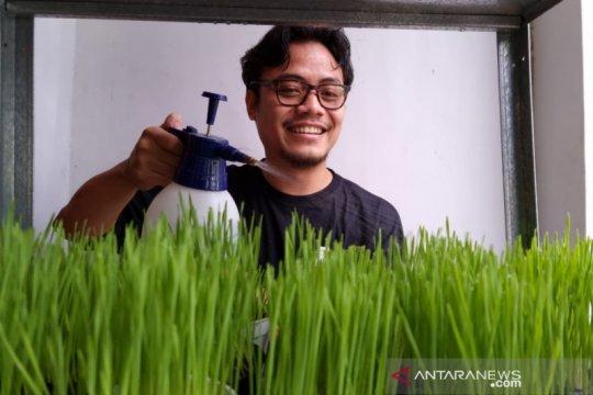 Belajar dari Acen, pebisnis rumput gandum kucing Ibu Kota